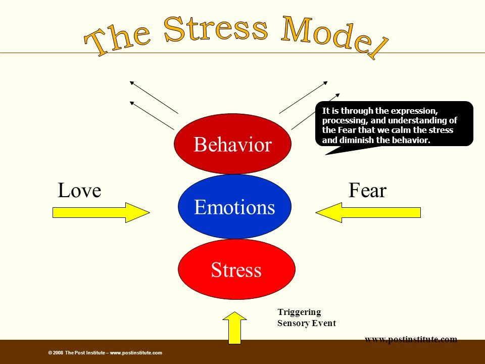 Behavior Emotions Stress LoveFear It is through the expression, processing, and understanding of the Fear that we calm the stress and diminish the behavior.