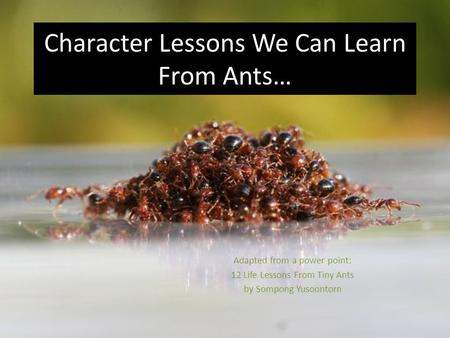 5 Leadership Skills We Can Learn From Ants