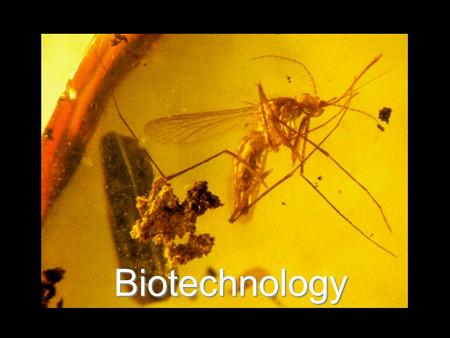 Biotechnology. Biotechnology The manipulation of biological processes or organisms to achieve a goal.