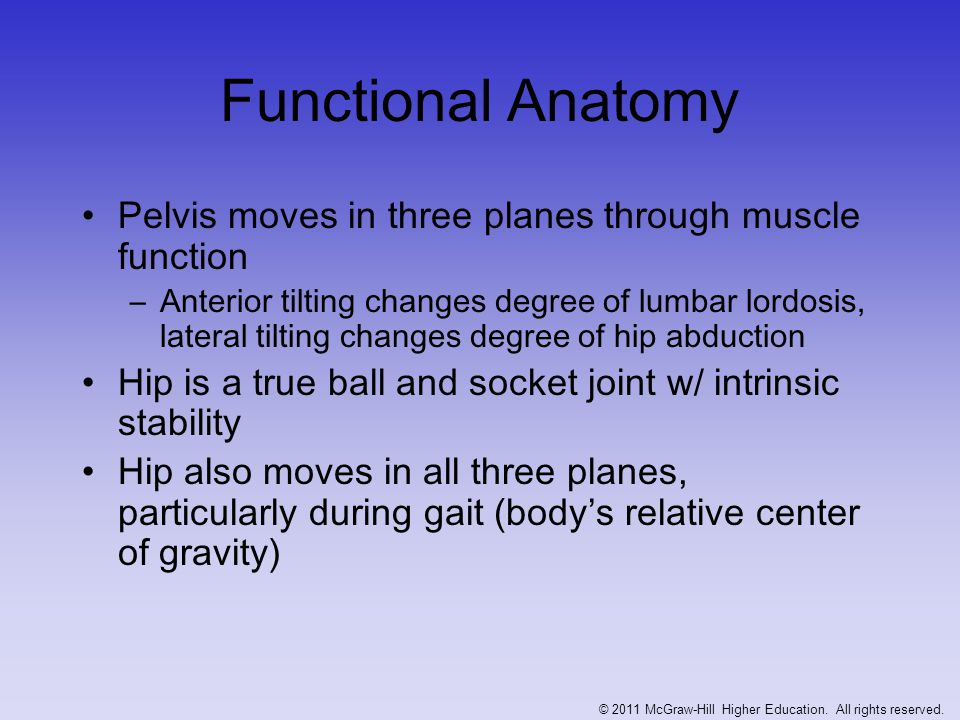Tremendous forces occur at the hip during varying degrees of locomotion Muscles are most commonly injured in this region Numerous muscles attach in this region and therefore injury to one can be very disabling and difficult to distinguish © 2011 McGraw-Hill Higher Education.