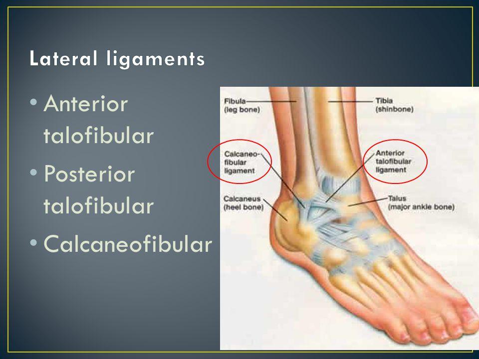Anterior inferior tibiofibular ligament Posterior inferior tibiofibular ligament