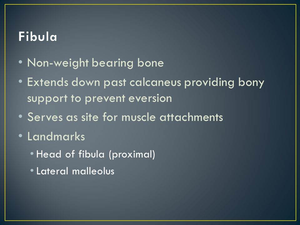 Talus—articulates with the tibia/fibula Calcaneus Navicular Cuboid Medial, intermediate and lateral cuneiforms