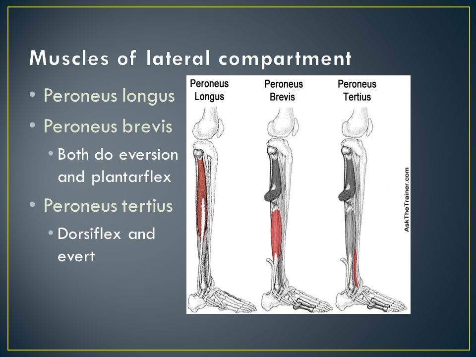 Tibialis Anterior Extensor Digitorum Longus Extensor Hallicus Longus All do dorsiflexion and some inversion EDL—extension of toes 2-5 EHL—extension of great toe **EDB—extends toes 2-4 (dorsum of foot)