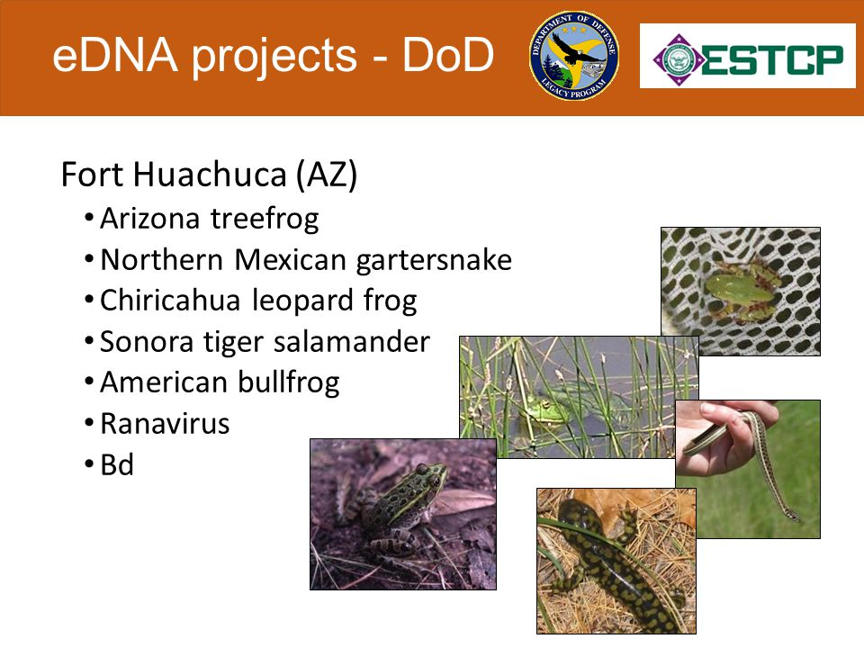 eDNA projects - DoD Eglin Air Force Base (FL) Reticulated flatwoods salamander Ornate chorus frog Yakima Training Center (WA) Bull trout, brook trout Spring and fall Chinook salmon