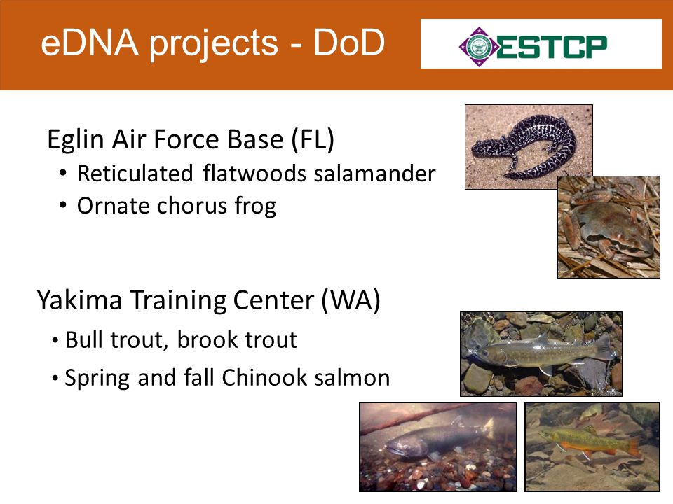  Collect 4 replicate water filter samples in coordination with field surveys  Compare detection probabilities of eDNA vs.