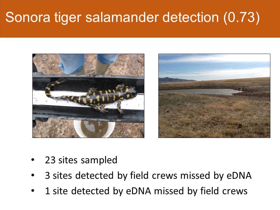 Sonora tiger salamander detection probability ModelAICΔAICWeight Volume38.3101.0 Area57.7319.420 Null60.0721.760 Conductivity61.0022.690 Temperature61.2622.950 pH62.0723.760 Sampling occasion65.7627.450