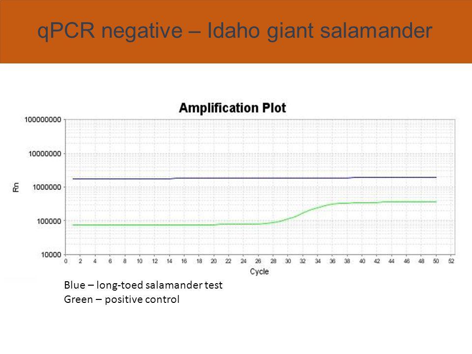 qPCR multiplex Red – Arizona treefrog Blue – Bd Green – positive control