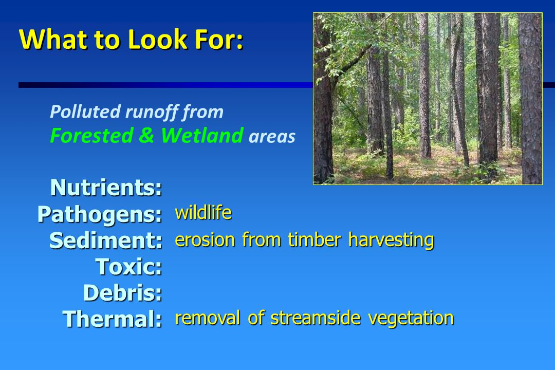 What to Look For: Polluted runoff from Open and Agricultural Areas Nutrients:Pathogens:Sediment:Toxic:Debris:Thermal: pet & wildlife waste removal of natural vegetative buffers, shallow water impoundments erosion from agricultural fields fertilizer from farms, parks, golf courses pesticides from farms & golf courses litter & illegal dumping