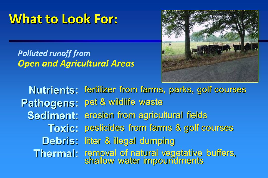 What to Look For: Polluted runoff from Residential areas Nutrients:Pathogens:Sediment:Toxic:Debris:Thermal: malfunctioning septic systems, pet waste heated runoff, removal of natural vegetative buffers construction, road sand, erosion from lawns & gardens lawn fertilizers & septic system effluent household products, pesticides litter & illegal dumping