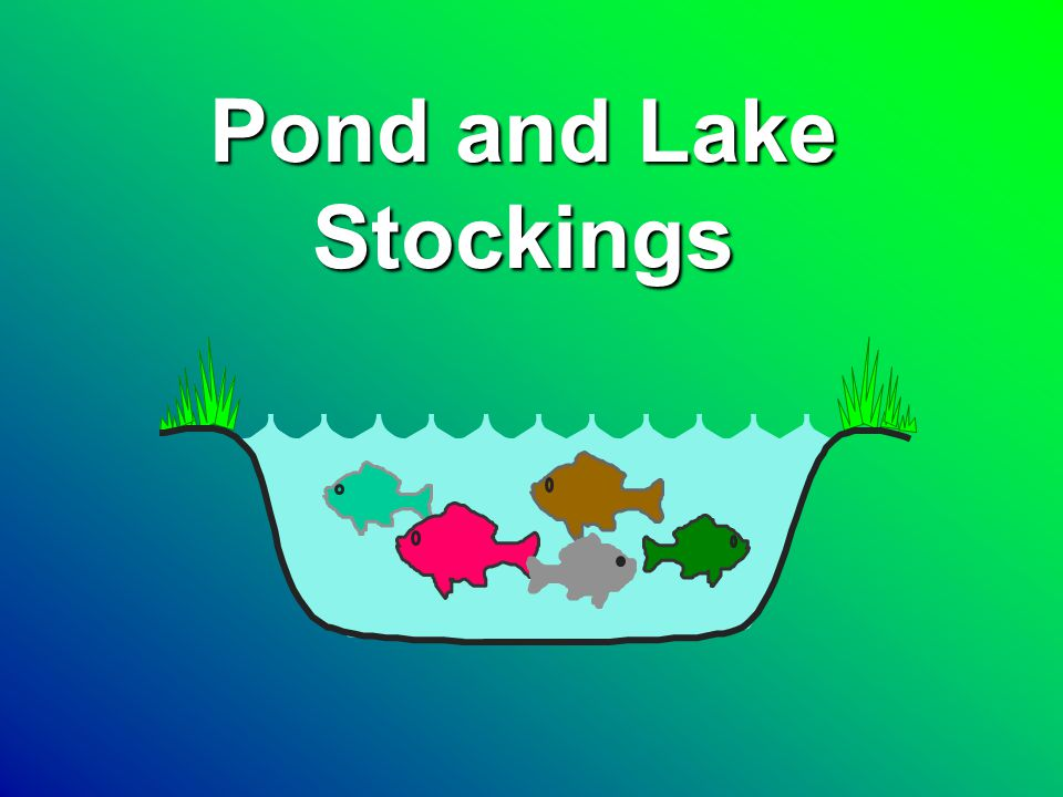 Pond Stocking Species Channel catfishChannel catfish Largemouth bassLargemouth bass BluegillBluegill Redear sunfishRedear sunfish Yellow perchYellow perch TroutTrout
