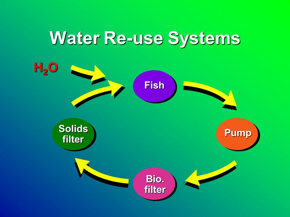 Re-circulating Aquaculture Systems (RAS) Layout