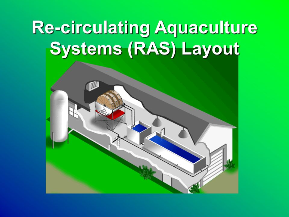 RAS Tank Aeration Biological Filters Solids Filter