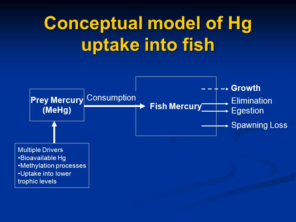 Fish Mercury Growth Elimination Egestion Spawning Loss Consumption Prey Mercury (MeHg) Multiple Drivers Bioavailable Hg Methylation processes Uptake into lower trophic levels