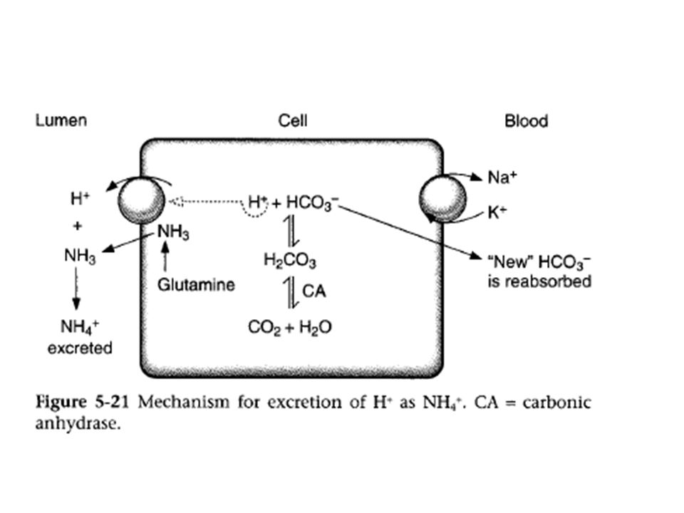 3) METABOLIC ACIDOSIS: Due to increase H ion production in body, conc of HCO3 decreases.