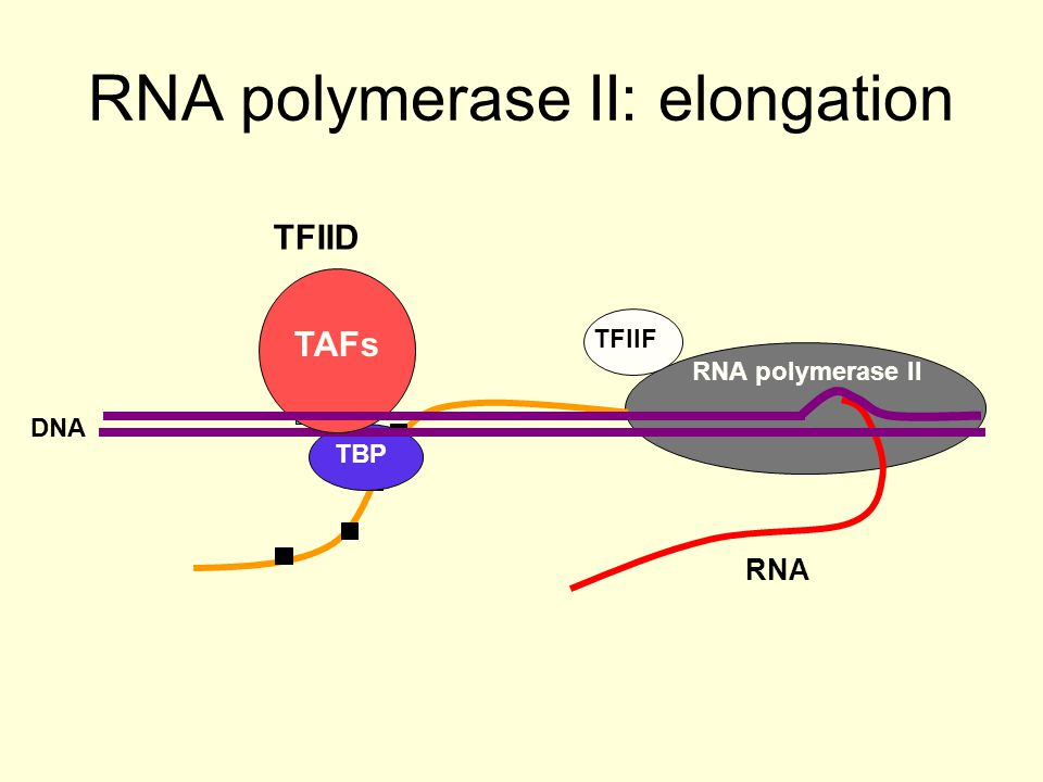Gene Expression RNA pol II TAFs TBP nucleosomes enhancer Transcriptional activator Mediator Acts on the basal machinery Histone modification complex Chromatin remodelling complex Translational coactivators and corepressors