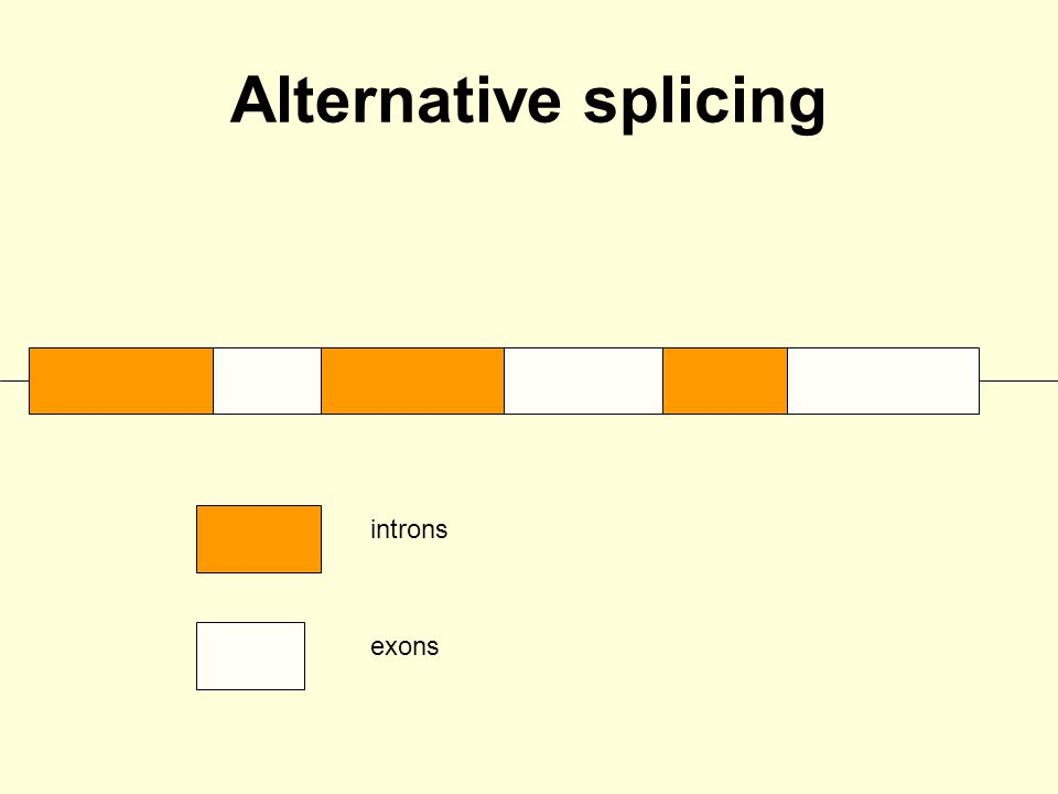 Alternative splicing introns exons Spliceosome, made up of 5 snRNPs and ~150 proteins
