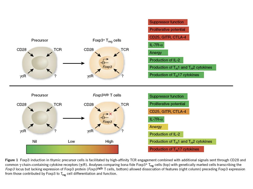 Control of Treg function by Foxp3 Interaction with TFs