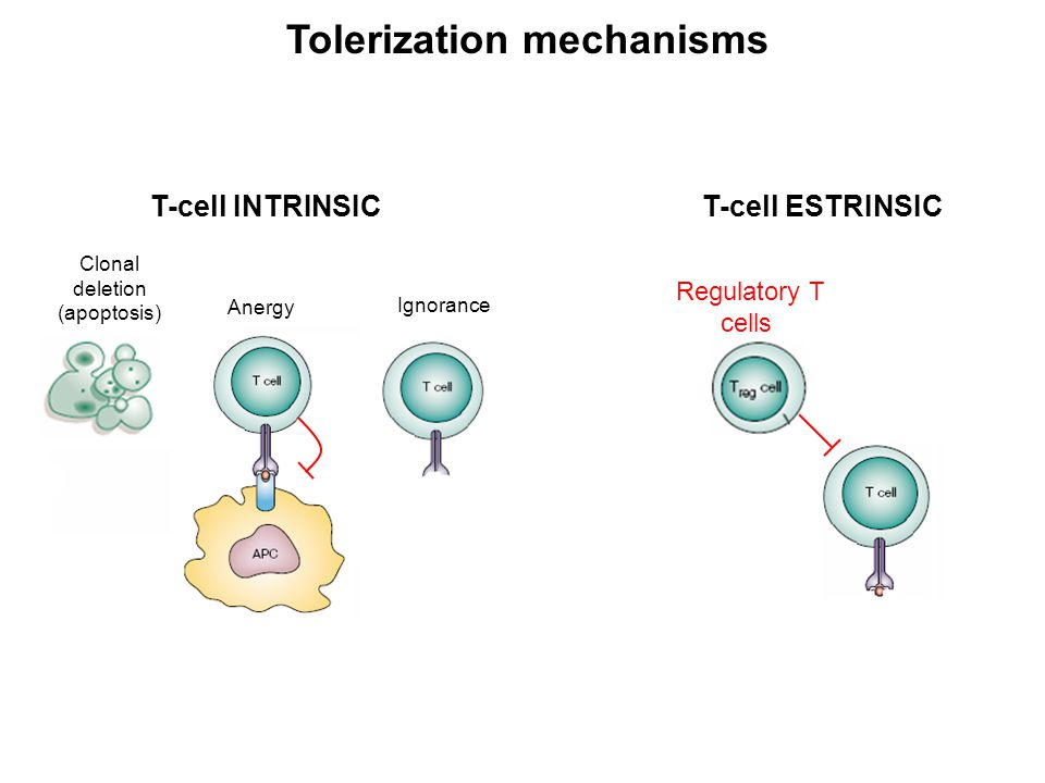Regulatory T cells Regulatory T cells (Tregs) represent a population of T cells that are specialized for the suppression of the immune response; Treg cells are essential for:  Maintaining peripheral tolerance (preventing autoimmunity)  Limiting chronic inflammatory diseases (immune homeostasis) However, they:  Limit beneficial immunity  Limit antitumor immunity