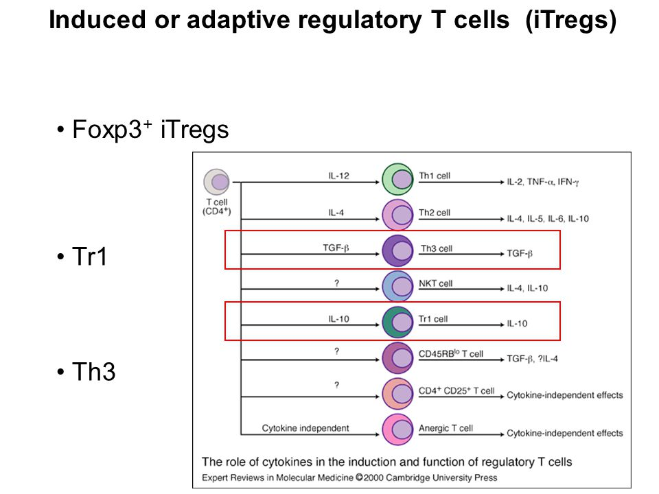 Role of Treg in infectious disease limit the magnitude of effector response (advantage/disadvantage for the host) limit collateral tissue damage (advantage) Treg function Effector response Outcome of an infection Infection activates both Tregs and effector function