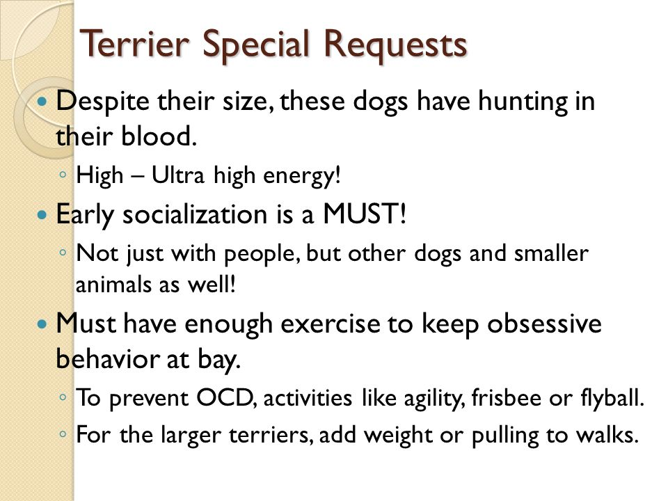 (More)Terrier Special Requests Exercise, exercise, and um, exercise.
