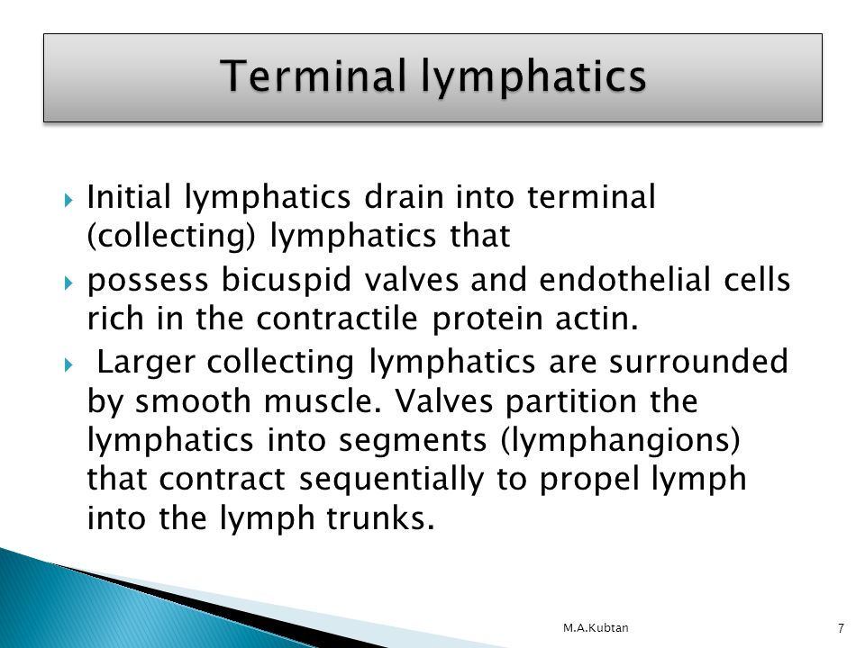  Terminal lymphatics lead to lymph trunks. Have a structure similar to that of veins.