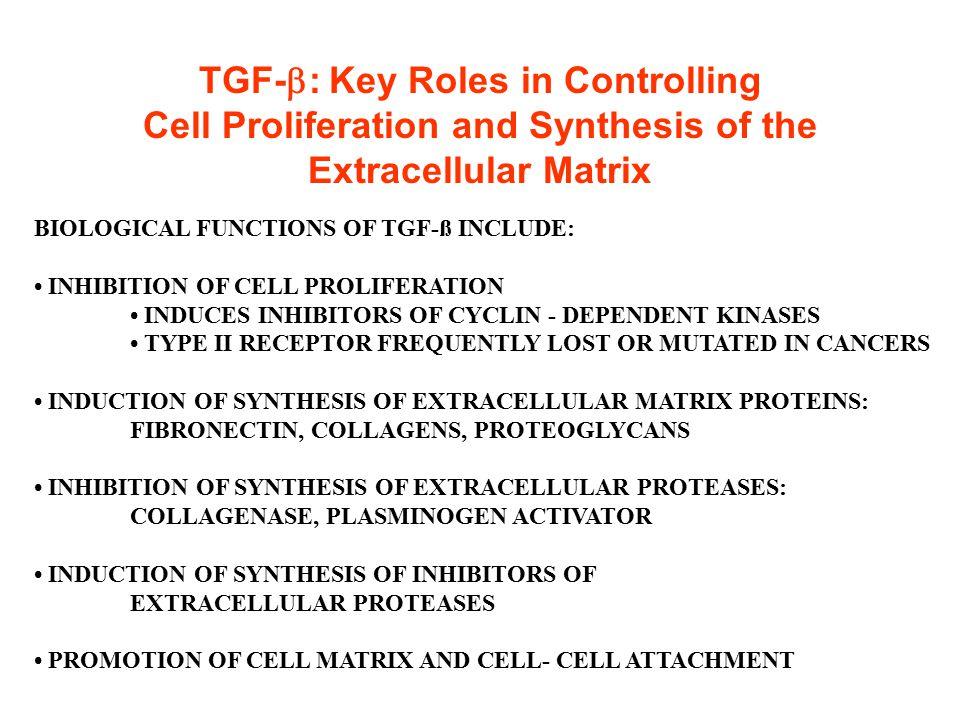 Schematic diagram of formation of mature dimeric TGF  proteins from secreted monomeric TGF  precursors.