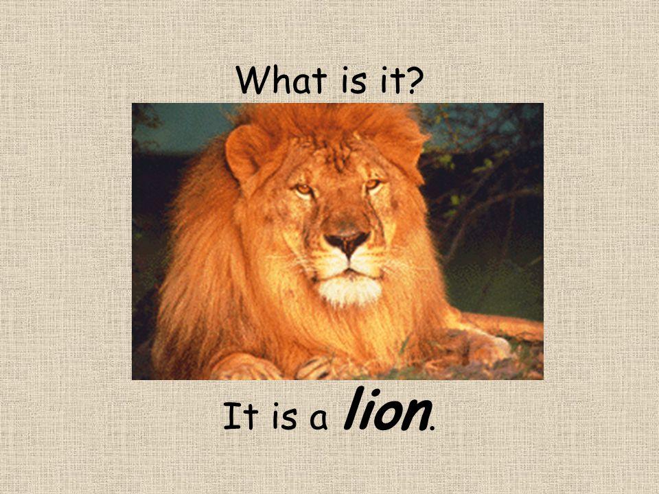 What is it? It is a lion.