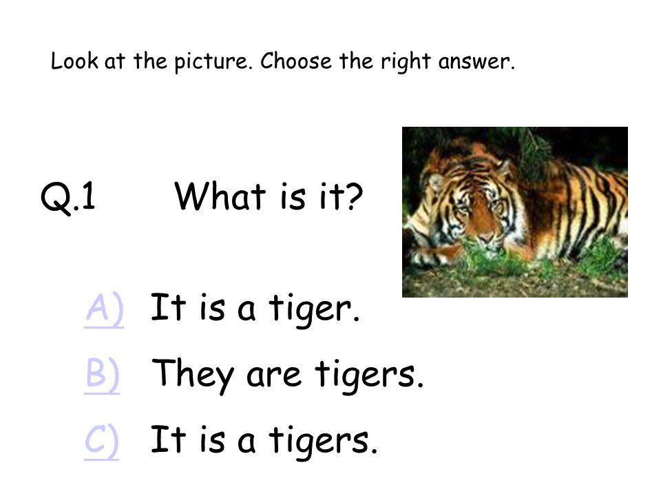 Q.1What is it.A)A)It is a tiger. B)B)They are tigers.
