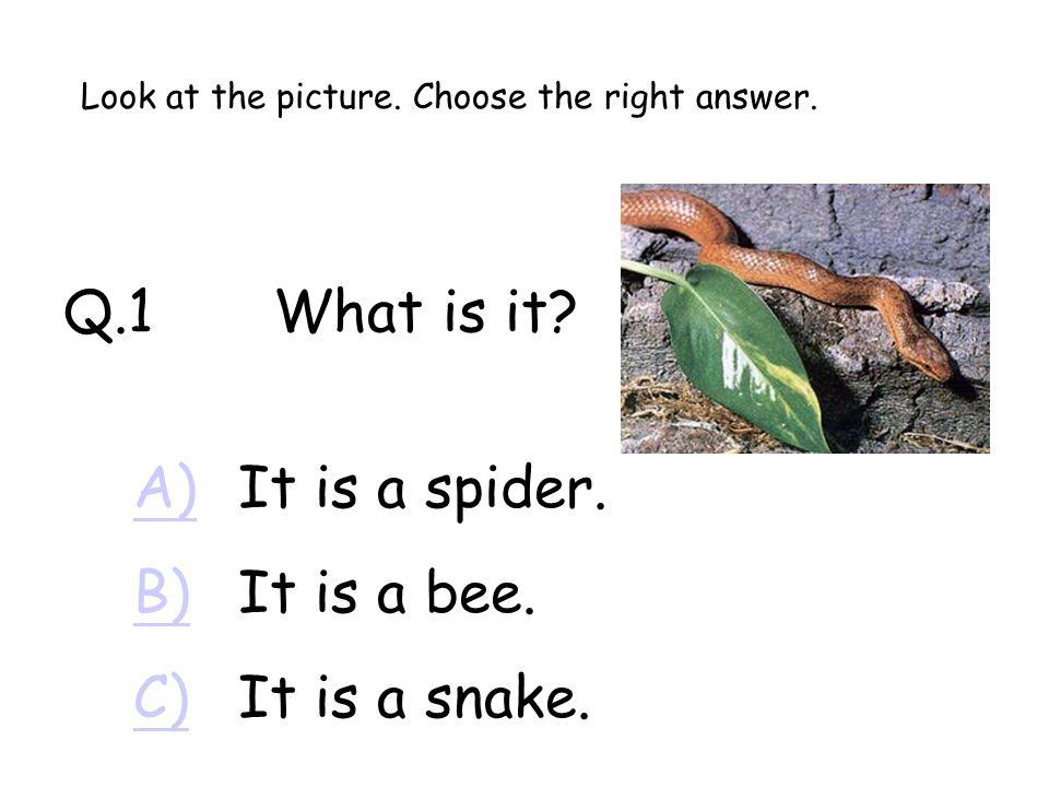 Q.1What is it.A)A)It is a spider. B)B)It is a bee.