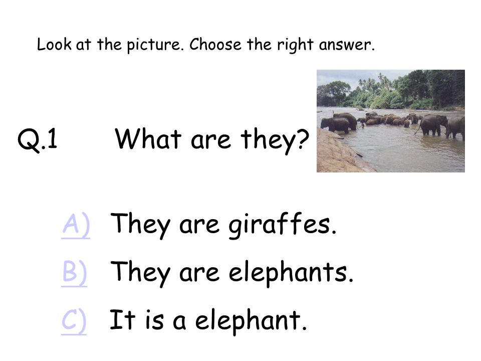 Q.1What are they.A)A)They are giraffes. B)B)They are elephants.