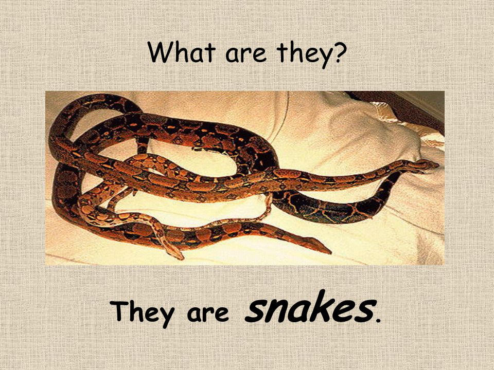 They are snakes. What are they?