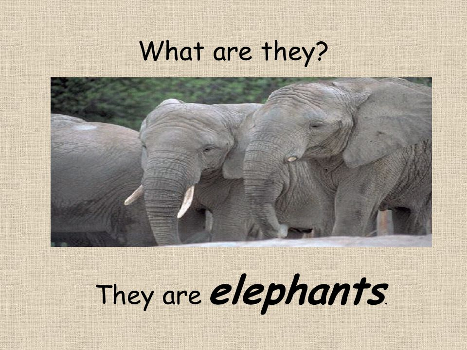 They are elephants.