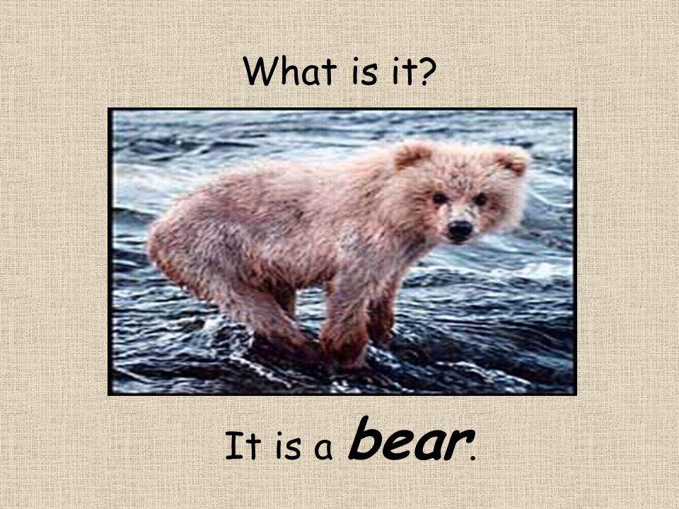 What is it? It is a bear.