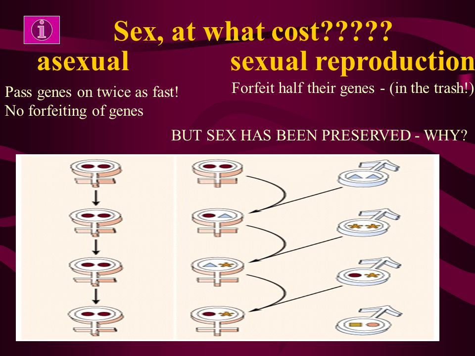 –More number of organisms –Less variation Like begets like, more or less: asexual rep.