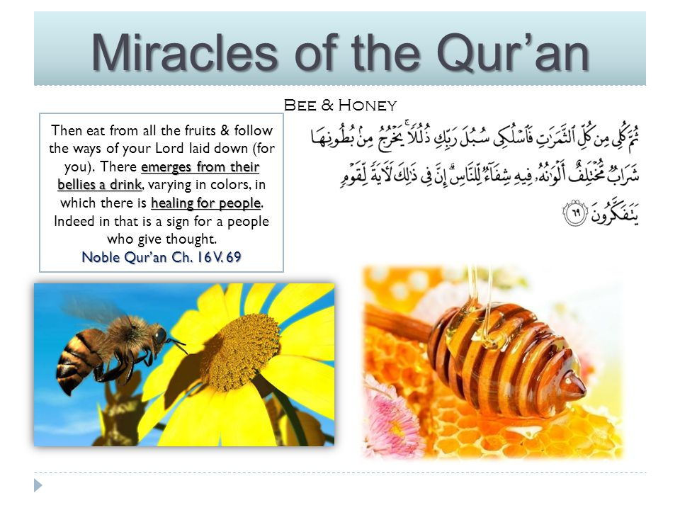 Miracles of the Qur'an Bee & honey Nowadays, Apiculture & bee products have opened a new branch of research in scientifically advanced parts of the world.
