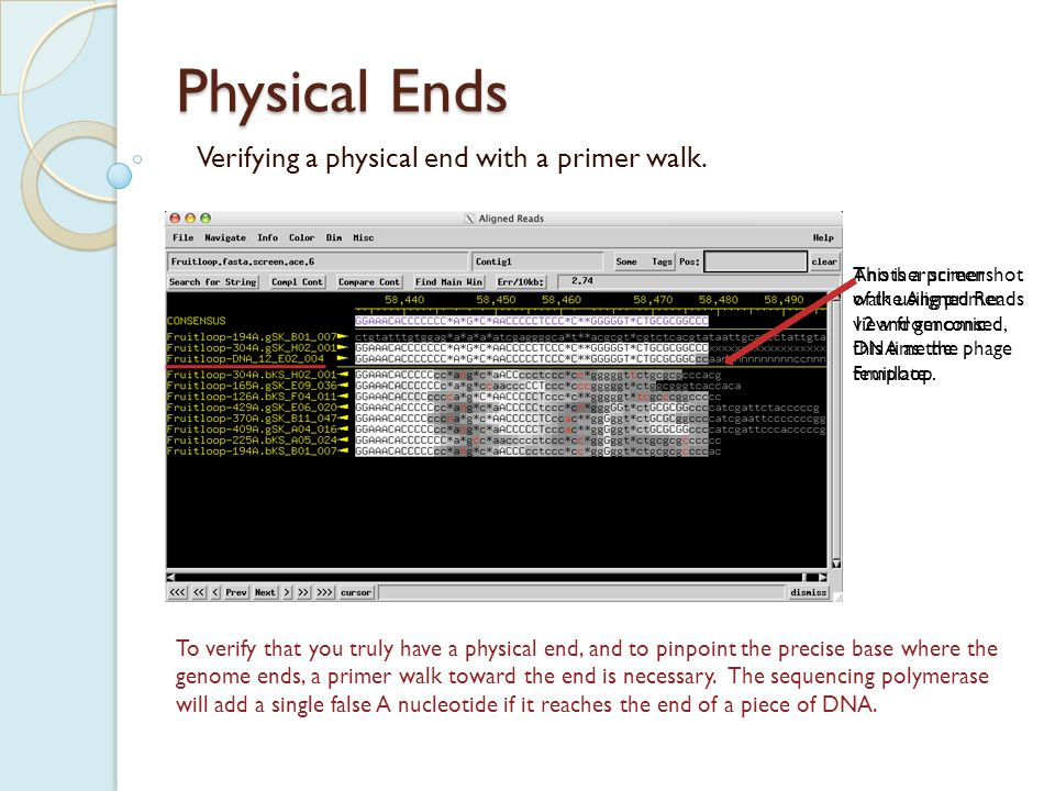 Physical Ends Verifying a physical end with a primer walk.