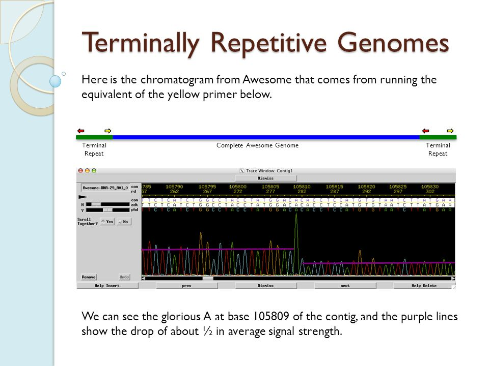 Terminally Repetitive Genomes And the equivalent of the red primer below, from Awesome.