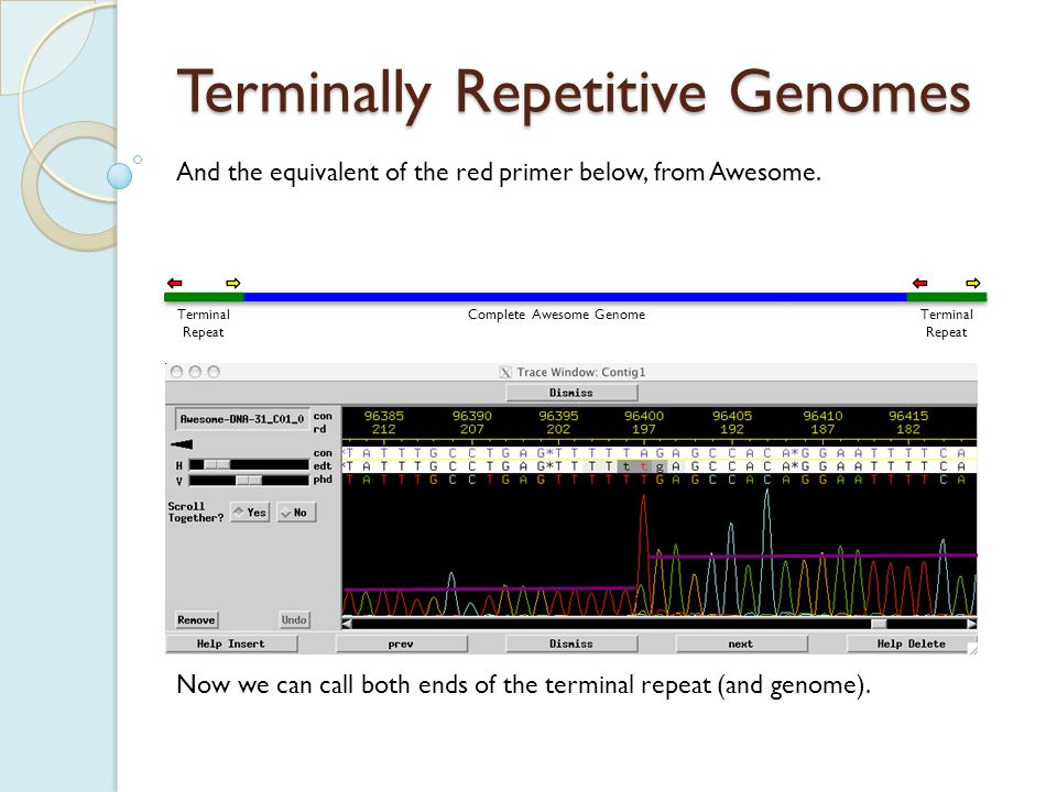 Terminally Repetitive Genomes One important note, whose relevance will become clear.
