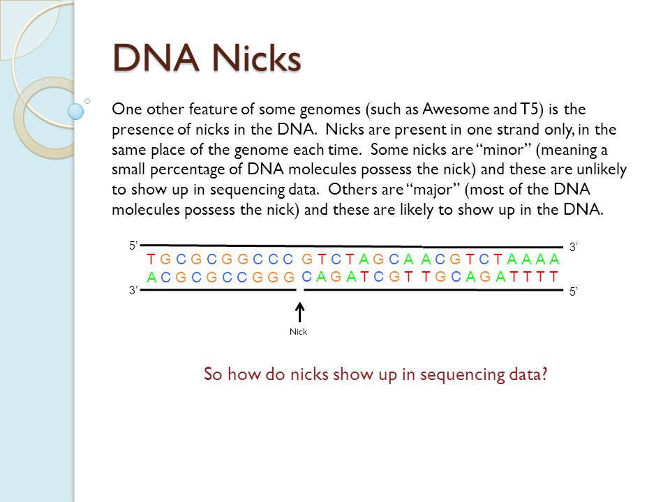 DNA Nicks In an assembly, major nicks will appear as a build up of clones on one strand, and a smear of clustered clones on the other strand.