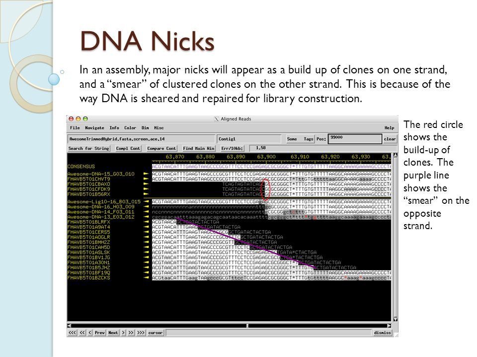 DNA Nicks Again, primer walks are needed to verify the nick.