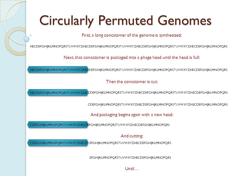CDEFGHIJKLMNOPQRSTUVWXYZABCD ABCDEFGHIJKLMNOPQRSTUVWXYZAB Circularly Permuted Genomes …an entire series of heads have had DNA packaged: Note that:  each new phage does have a complete complement of genes (A  Z, plus 2 duplicates)  there are ends within each individual phage, but the ends are not conserved among particles GHIJKLMNOPQRSTUVWXYZABCDEFGH EFGHIJKLMNOPQRSTUVWXYZABCDEF IJKLMNOPQRSTUVWXYZABCDEFGHIJ MNOPQRSTUVWXYZABCDEFGHIJKLMN KLMNOPQRSTUVWXYZABCDEFGHIJKL So what does this mean for finishing genomes?