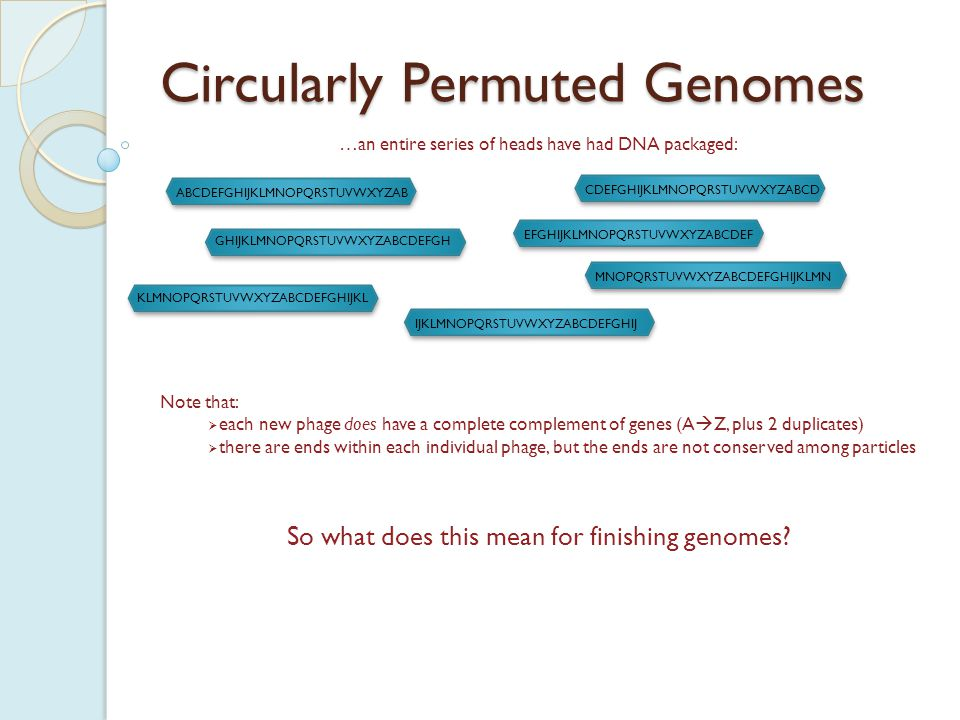 Circularly Permuted Genomes A phage with a circularly permuted genome will not have any defined ends.