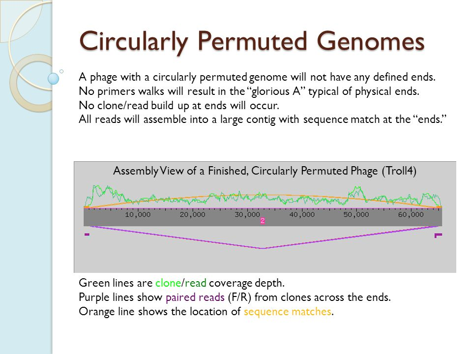 Circularly Permuted Genomes We can tell this phage is circularly permuted because there is strong clone and read coverage throughout, and overlap at the ends.