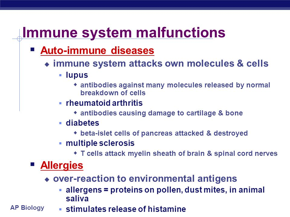 AP Biology Immune system malfunctions  Auto-immune diseases  immune system attacks own molecules & cells  lupus  antibodies against many molecules released by normal breakdown of cells  rheumatoid arthritis  antibodies causing damage to cartilage & bone  diabetes  beta-islet cells of pancreas attacked & destroyed  multiple sclerosis  T cells attack myelin sheath of brain & spinal cord nerves  Allergies  over-reaction to environmental antigens  allergens = proteins on pollen, dust mites, in animal saliva  stimulates release of histamine