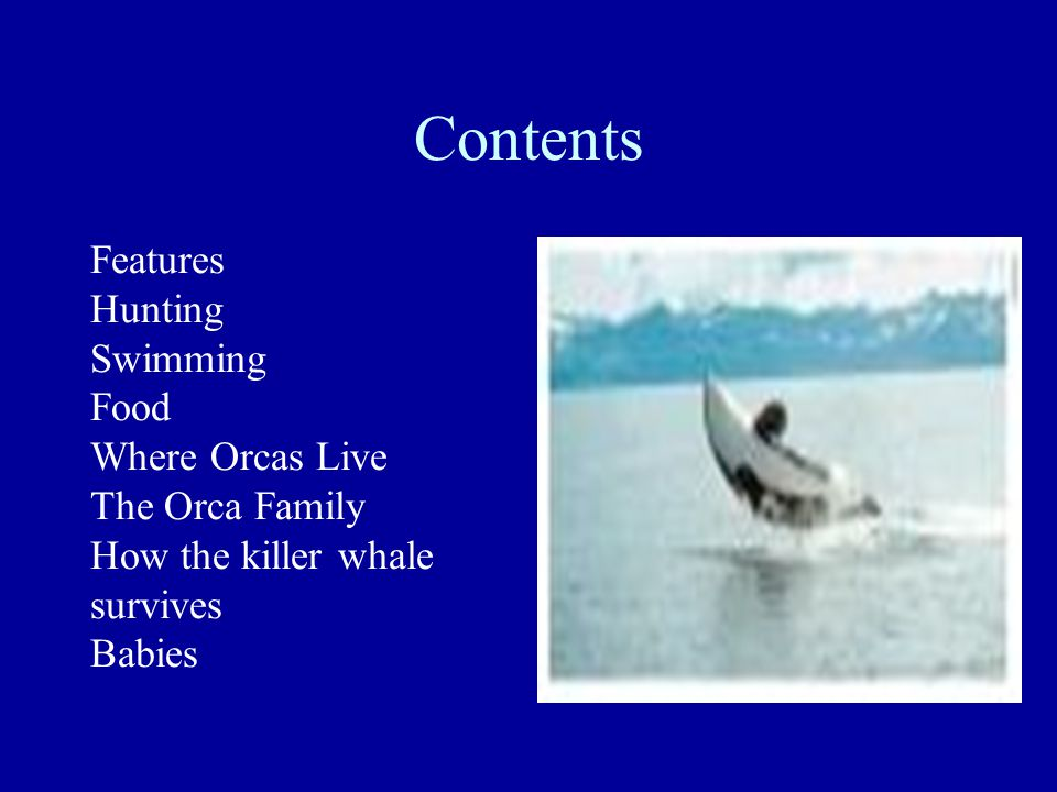 Features The Orca whale is the biggest dolphin, it belongs to the dolphin family.