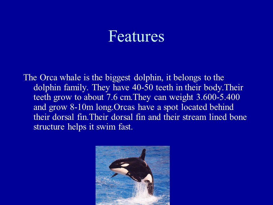 Orcas hunt in pods, a group of Orcas could easily take down a shark.If a Orca gets hurt the others will protect that Orca.