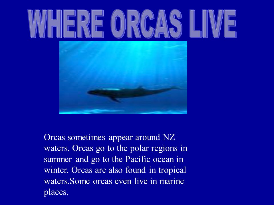 Male Orcas have a different dorsal fin to the female,the Orca males diet is different to the female to.