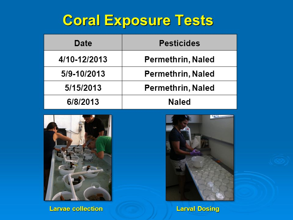 Coral Larvae Exposure to Permethrin Coral larvae exposures: No acute toxicity up to 10 ug/L Higher exposure concentrations and sub-lethal effects exposure tests are under investigation Permethrin persistence: Little degradation over 18 hrs