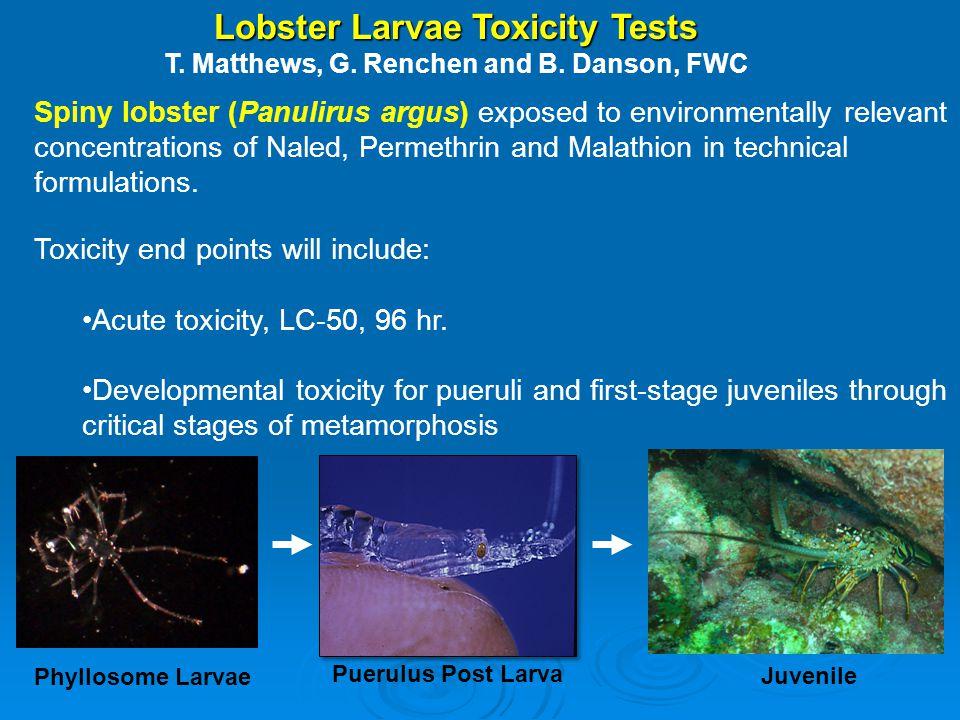 FWRI Lobster Larval Exposure Tests PesticideStart DateEnd Date # Larvae Permethrin10/19/201210/31/2012151 Permethrin2/19/20133/1/2013175 Malathion*11/17/201212/14/2012150 Malathion*3/19/20133/27/2013172 Naled1/16/20132/1/2013150 Naled5/16/20135/24/201361 * inconclusive