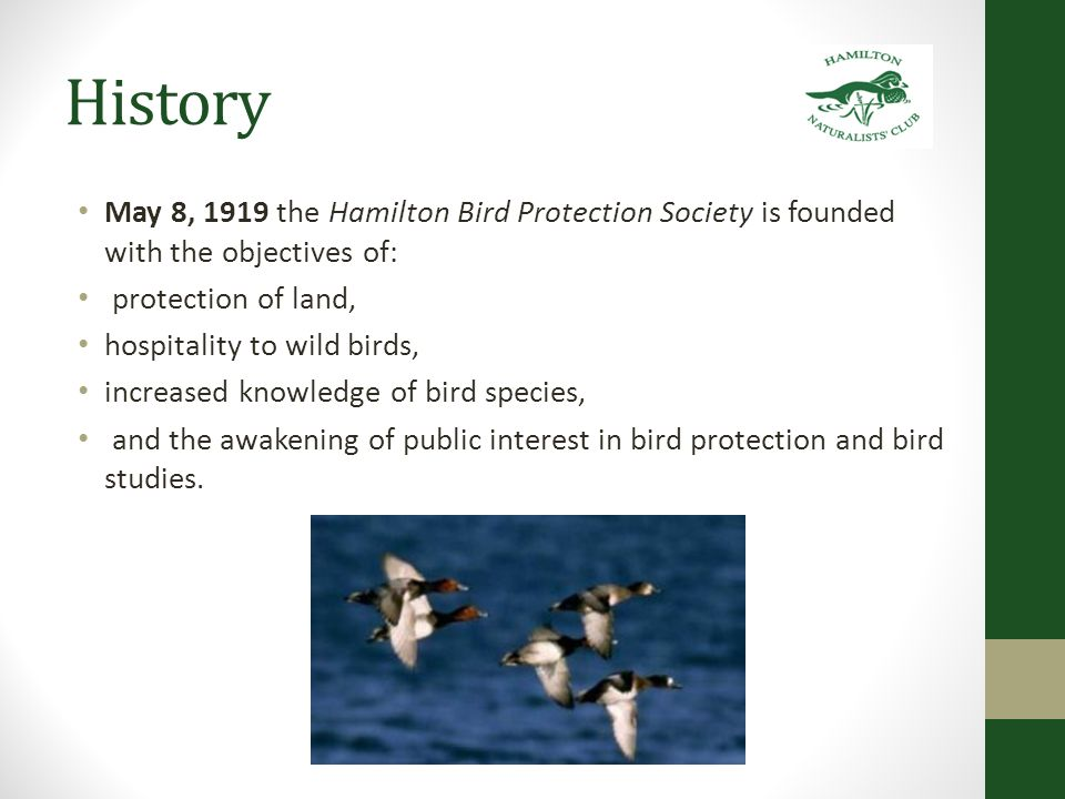 History – First Steps Establishing Bird Sanctuaries 1919 Barton Reservoir 1920 Dundas Marsh (Cootes Paradise) 1927 Marsh was officially declared a game sanctuary by the Ontario Department of Game and Fisheries.